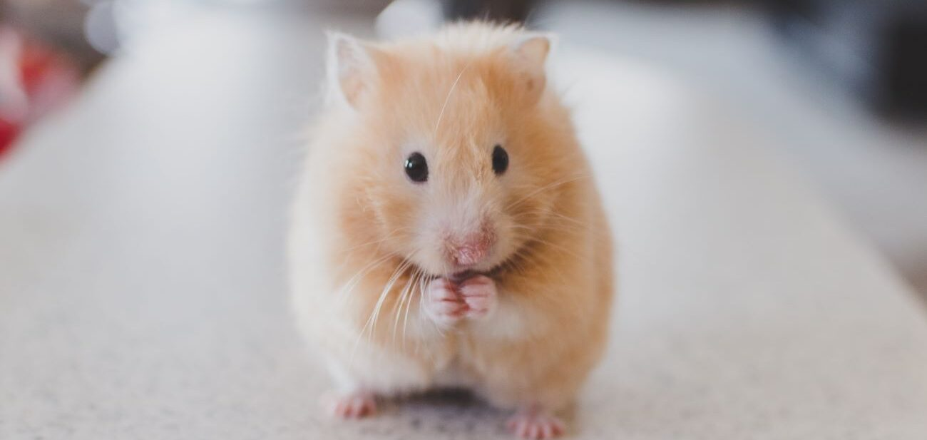Arncliffe Court hamsters