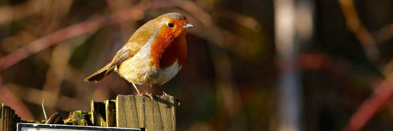 Residents at Haydale Care Home took part in the 2021 Big Birdwatch to discover which types of bird visited the gardens.