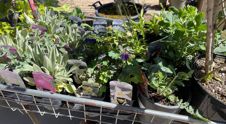 Bishops Cleeve National Gardening Week